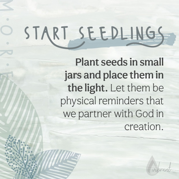 directions for planting seedlings